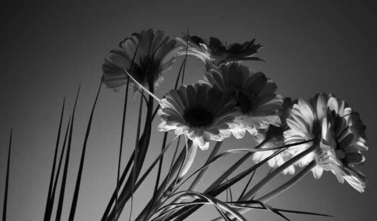 art back light beautiful black and white